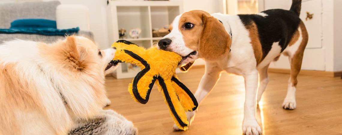 Hunde streiten sich