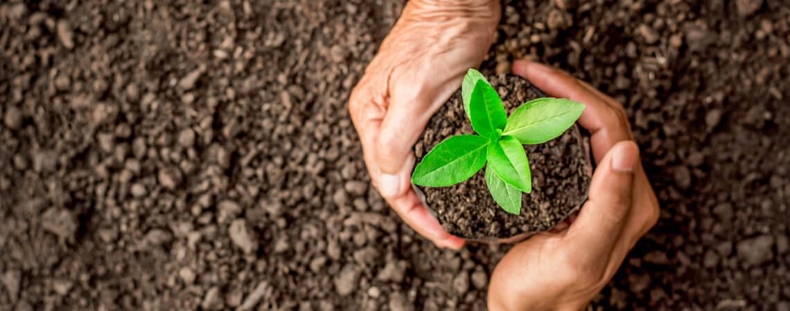Hände und Pflanze