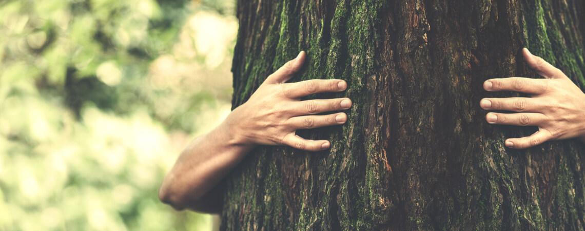 Nachhaltigkeit: Mensch, der einen Baum umarmt