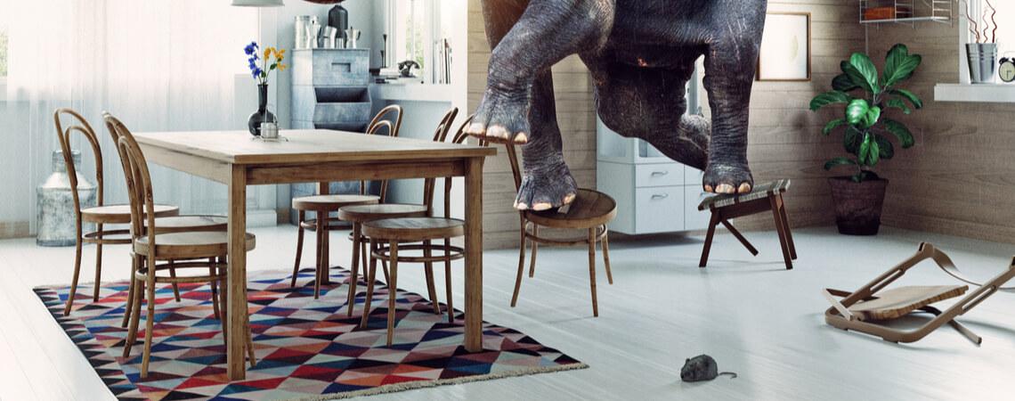 Elefant klettert aus Angst vor Maus auf Stühle