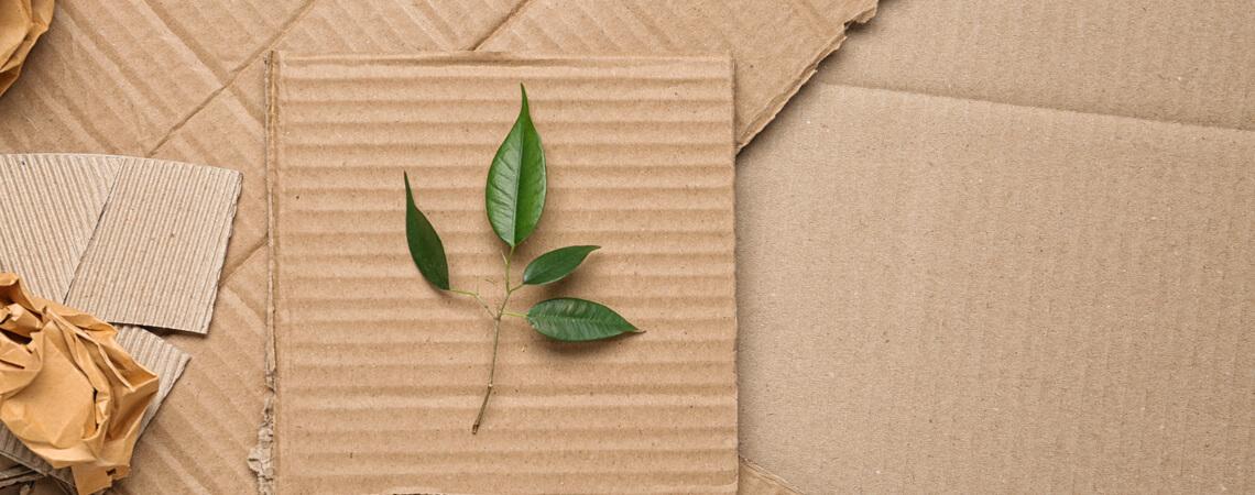 Verpackungsmüll und grünes Blatt