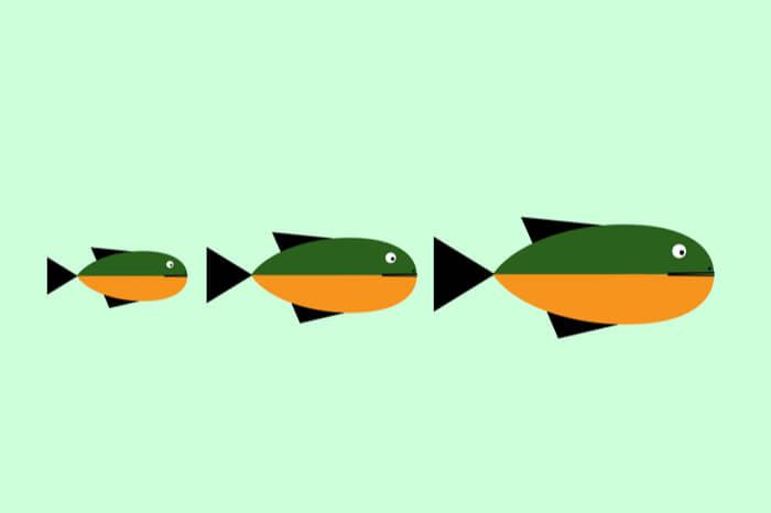 Drei Fische in unterschiedlichen Größen