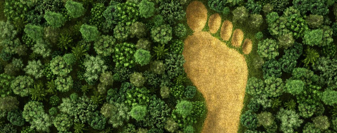 Umweltschutz: Ökologischer Fußabdruck im Wald