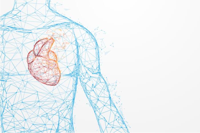Menschliche Herz-Anatomie formt Linien und Dreiecke