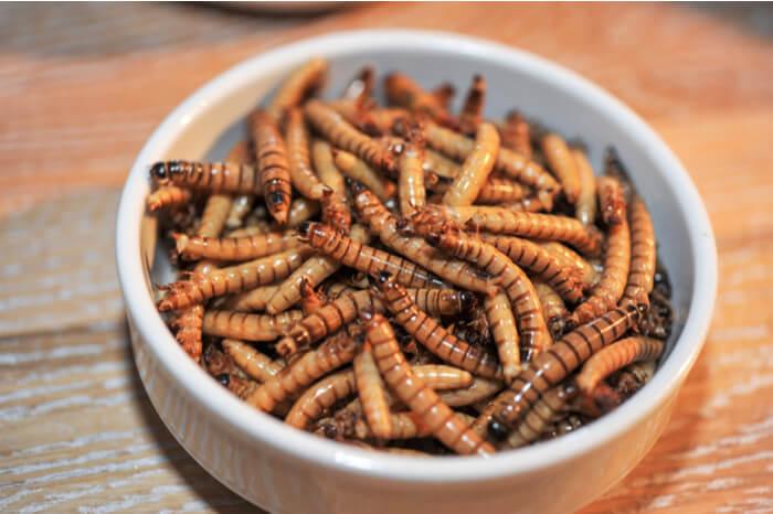 Insekten in einer Schale
