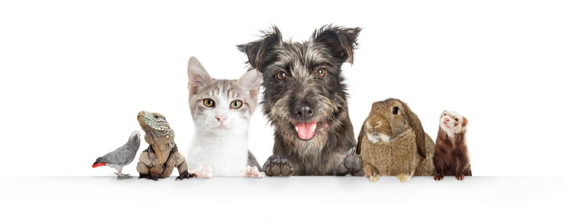 Diverse Haustiere vor weißem Hintergrund