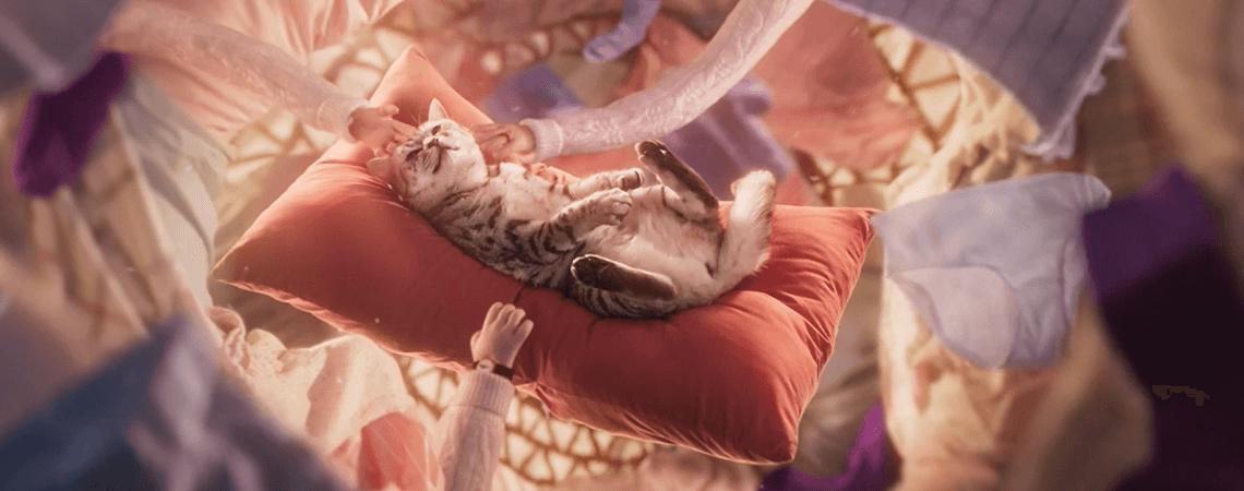 Katze auf Kissen wird gestreichelt